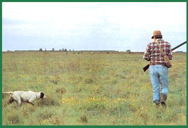 Caza de la perdiz roja (Alectoris rufa)